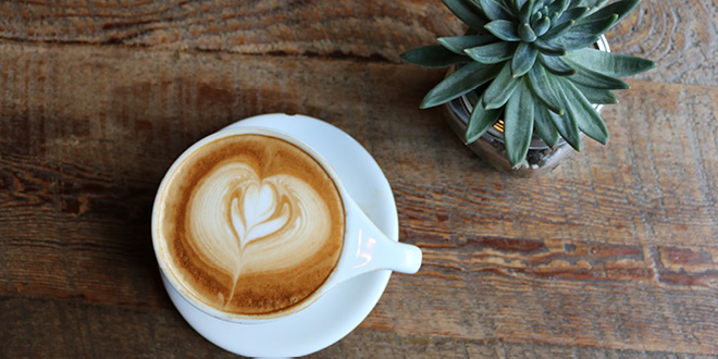 coffee-plant-w